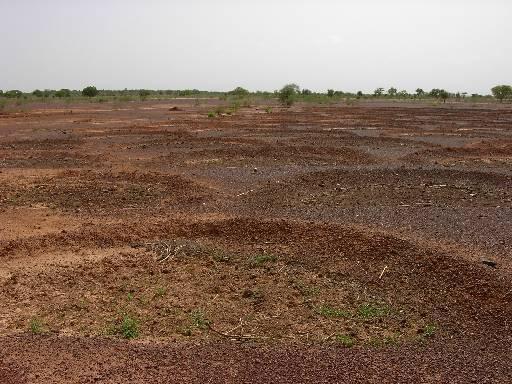Infertile Soil And Infertile Soil Here